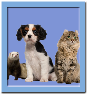 Pets - dog, cat, ferret